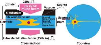 neuron_1_e.png